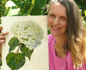 Connecticut Artist Janet Zeh Releases Botanical Flower Print Series